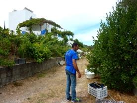 Petimezi készítés a Green House-ban